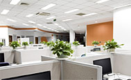 银海松-办公区域